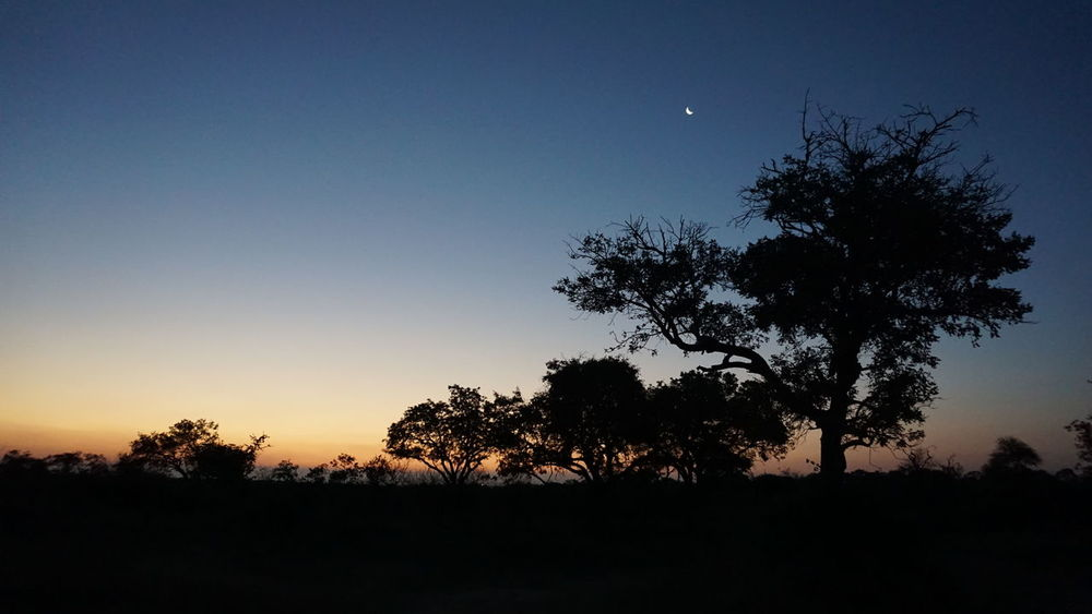 Kruger National Park, South Africa First Eyeem Photo Wild Nature Sunset Evening Sky Moon Tree Sky Clear Sky No People Wild Africa