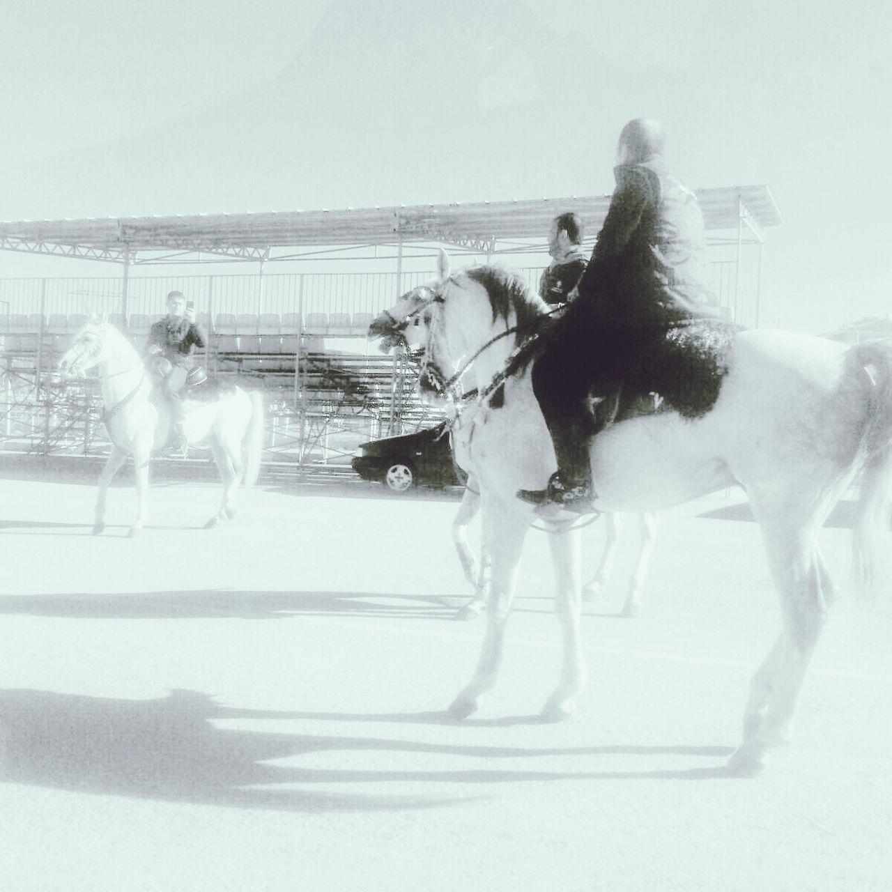 Streets Raiding Traveling Horses Home Sweet Home Freedom Horse Woman Eye LG G3photography Showcase: December B&w Street Photography Kriselfy Photograpy HelloEyeEm EyeEm Best Shots Director Check This Out Cirit Area Turkish Airlines Kitapkokusu Lifestyle