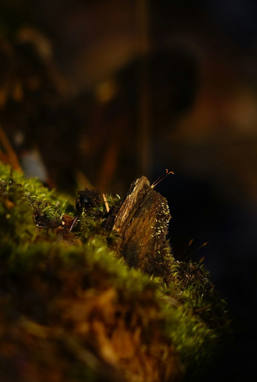 Surface Level Of Moss Growing On Wood