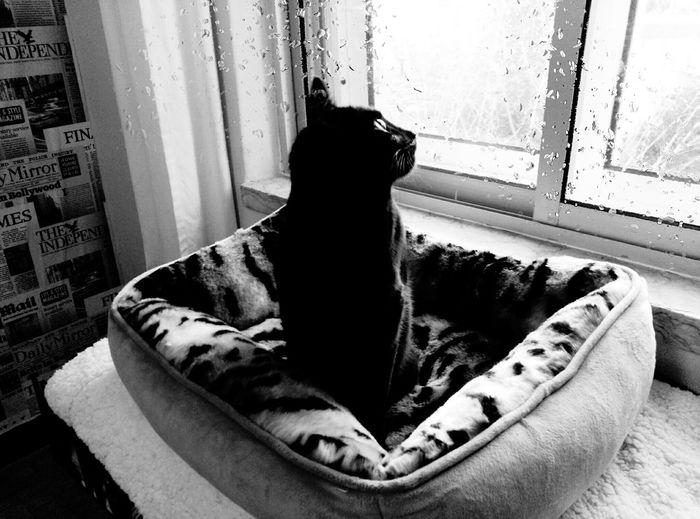 Cats Blackandwhite BLackCat New Bed! Felixonegrao