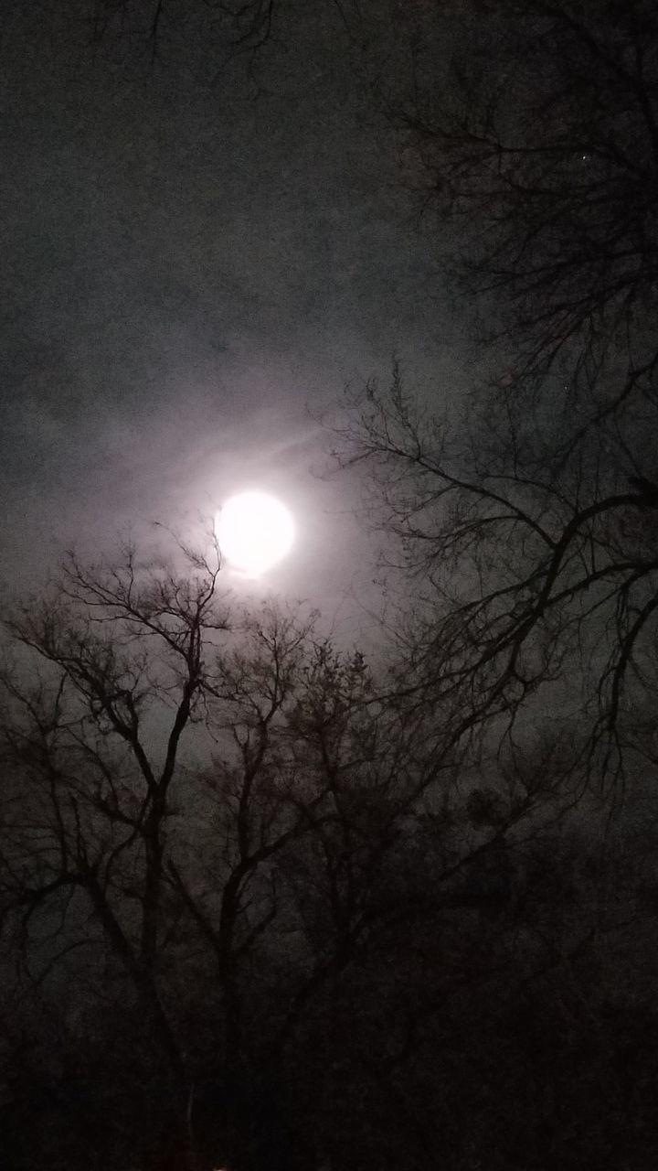 moon, sun, beauty in nature, nature, bare tree, scenics, solar eclipse, sky, moonlight, outdoors, low angle view, astronomy, tranquility, branch, tree, no people, crescent, half moon