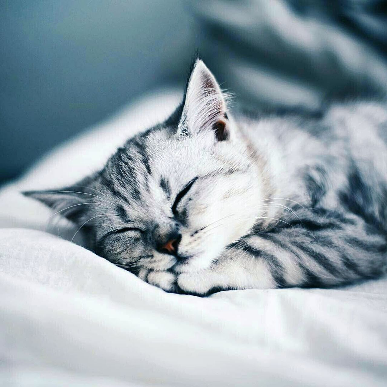 domestic cat, animal themes, one animal, domestic animals, lying down, pets, relaxation, no people, mammal, feline, sleeping, indoors, resting, eyes closed, bed, close-up, day