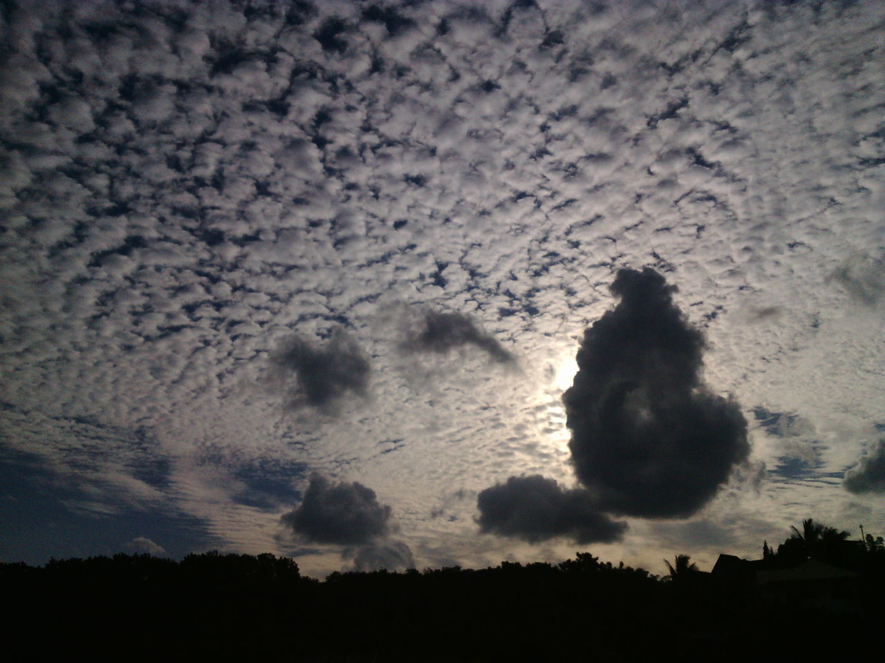 sky, nature, no people, cloud - sky, beauty in nature, low angle view, silhouette, outdoors, sunset, day, animal themes