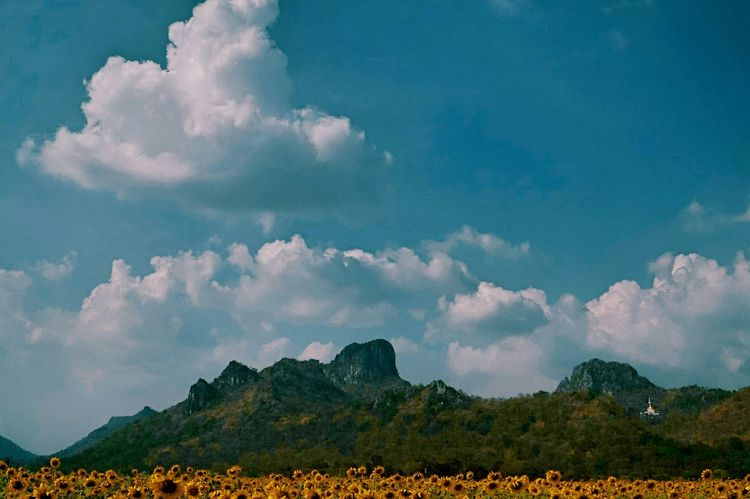 EyeEm Nature Lover Clouds And Sky Nature Cloudporn Traveling Lopburi Sunflowers Hot Sunny Day Eye4photography  Taking Photos
