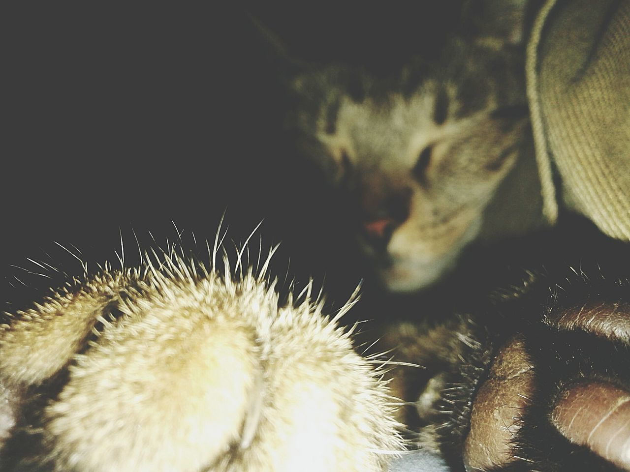 Cat Naps Close-up Cats Animals Furryfriends Simba Paws And Claws Paws First Eyeem Photo