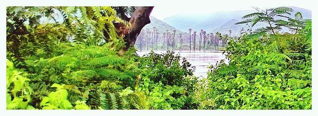 Connected With Nature Nature_collection EyeEm Nature Lover Natureperfect Sneek Peek Feeling Inspired Green Freshness Instafreshness FreshnessOverload
