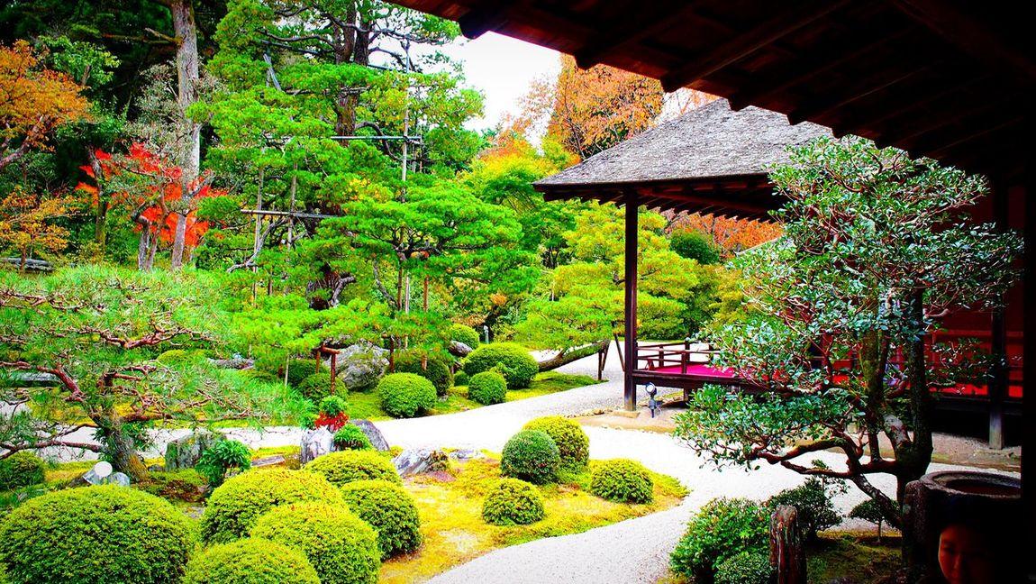 曼殊院 曼殊院門跡 京都 Kyoto Japanese Garden Autumn Colors 2015  Autumn Kyototrip Travel Destinations Relaxing Kyoto, Japan Kyoto Autumn Hello World Enjoying Life