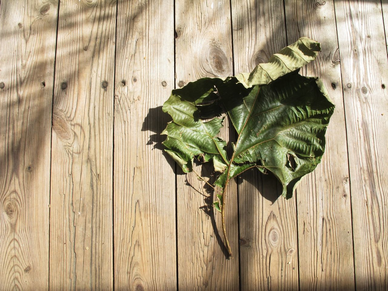 wood - material, leaf, plant, table, green color, no people, directly above, nature, textured, food and drink, close-up, wood grain, indoors, wood paneling, freshness, healthy eating, food, day