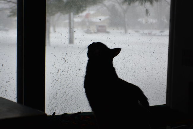 Kiki loves the snow Black Color Curious Cat Dark Domestic Animals Domestic Cat Feline No People Pets Snowing Watching Snow Window Window Sill Looking Up Snowing ❄ Snow Curious Curiosity Cat Black Cat Black Shillouette Sniff Sniffing Window View Sitting