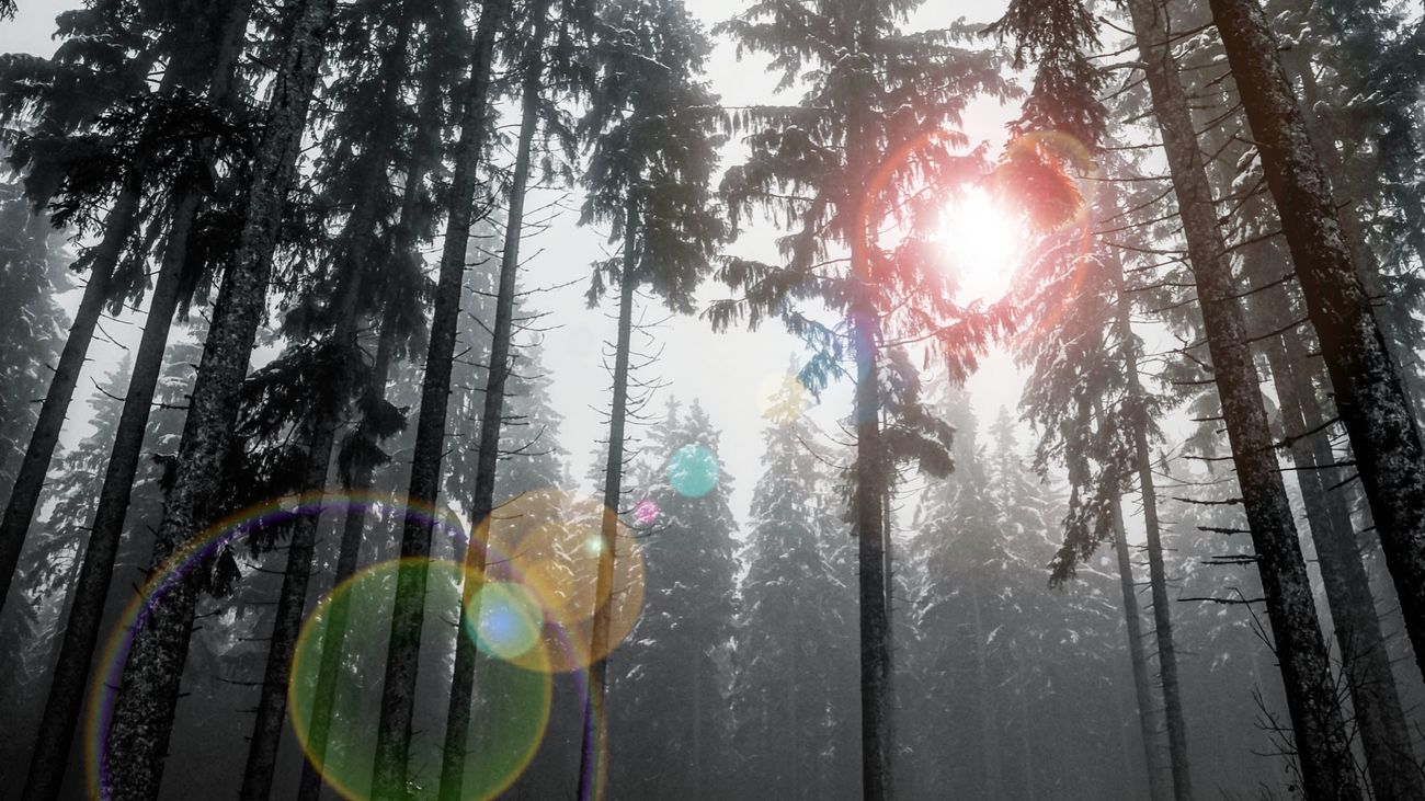 Wood Woods Light And Shadow Lensflare Lensflares Editedbyme Mystical Atmosphere Gegenlicht Bäume Wald Waldspaziergang Sunbeam Hello World Lovetotakepics Creativity