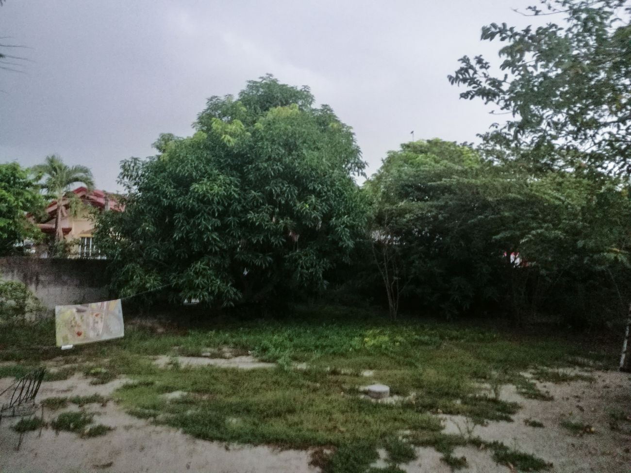 Now its gloomy Tree Outdoors Sky Gloomy Weather
