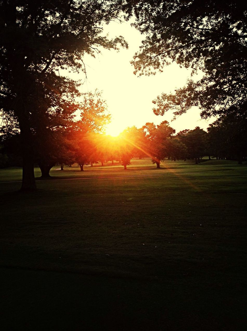 another sunset pic lol The Grass Is Green