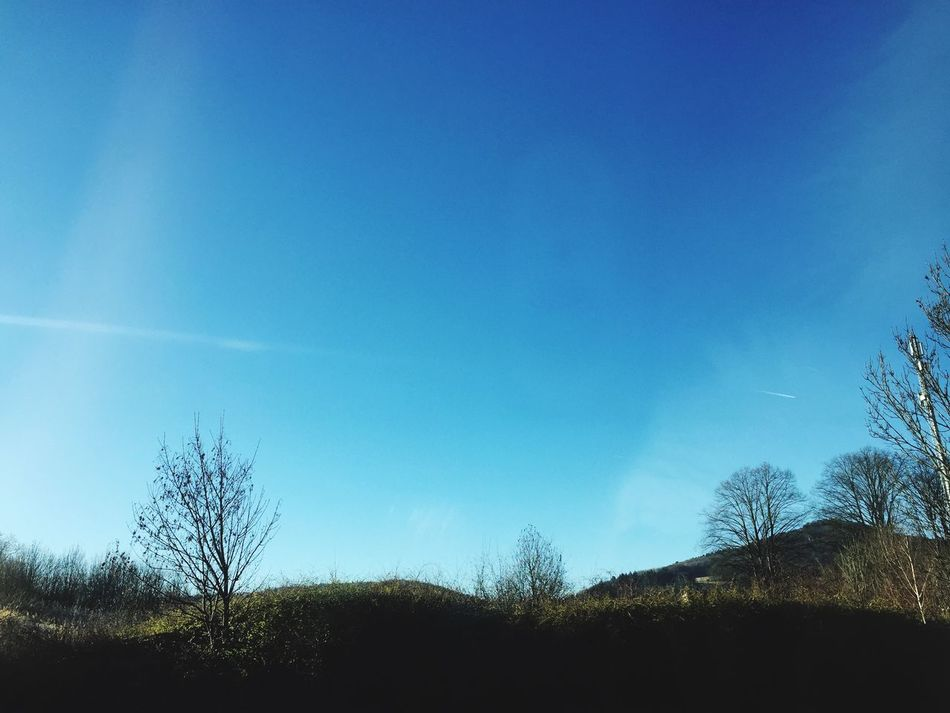Tree Blue Sky Nature Beauty In Nature Tranquility Outdoors Day No People Landscape Scenics Sunlight Taking Photos Photography Holydays