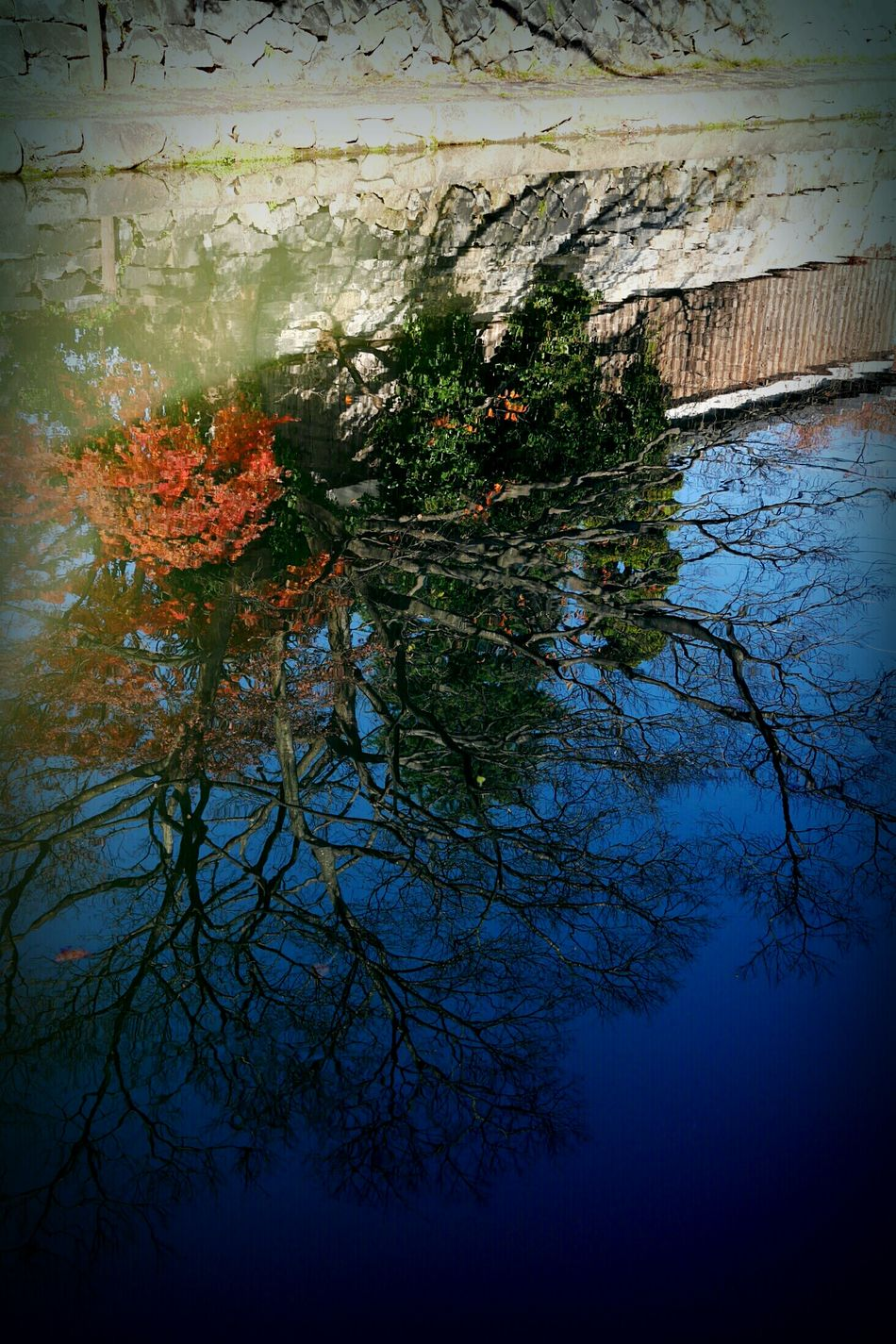 Waterway Ōmihachiman Shiga,Japan Winter Water Reflection Calm Tree Sky