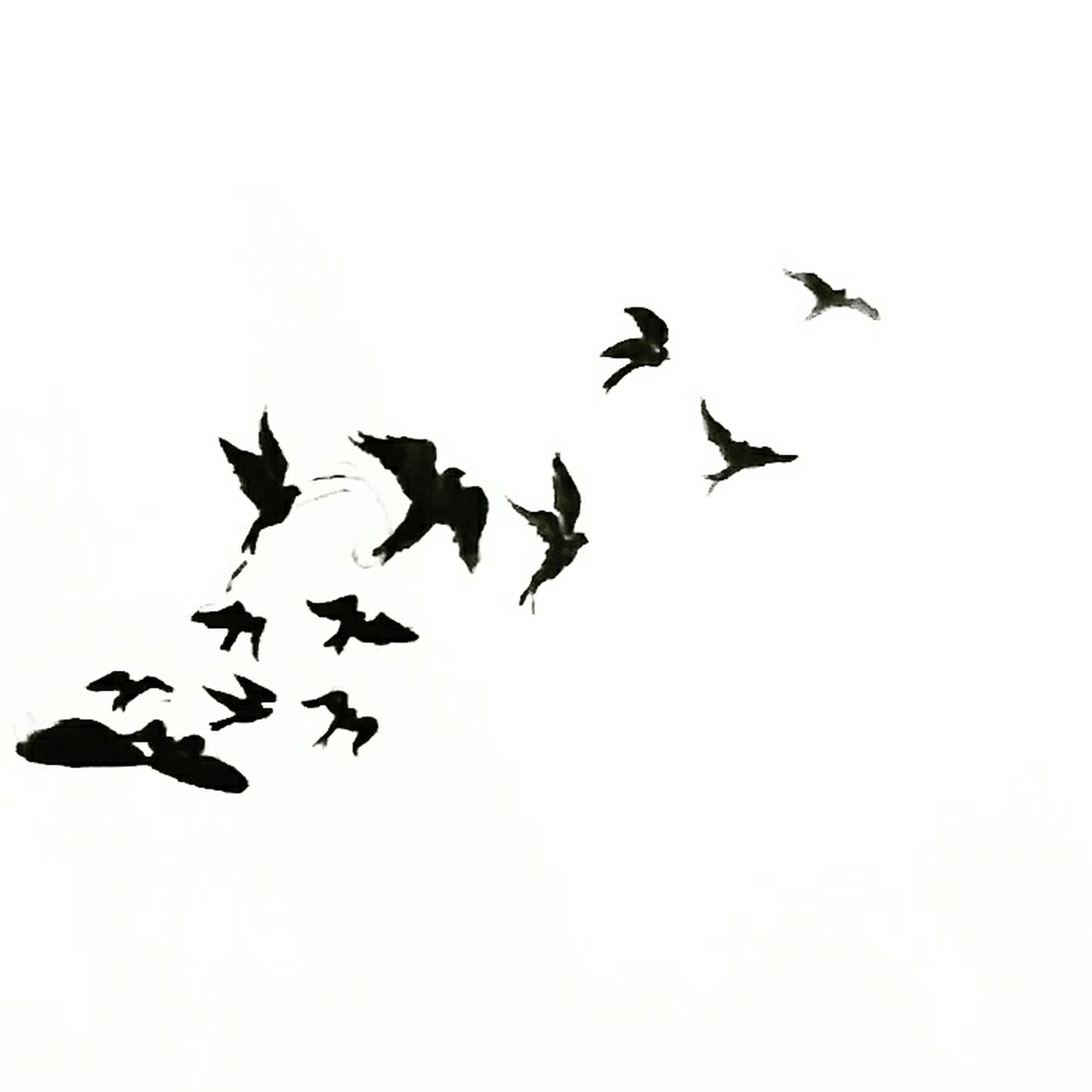 bird, animal themes, flying, animals in the wild, wildlife, flock of birds, low angle view, clear sky, spread wings, togetherness, mid-air, copy space, medium group of animals, nature, outdoors, day, sky, zoology, silhouette