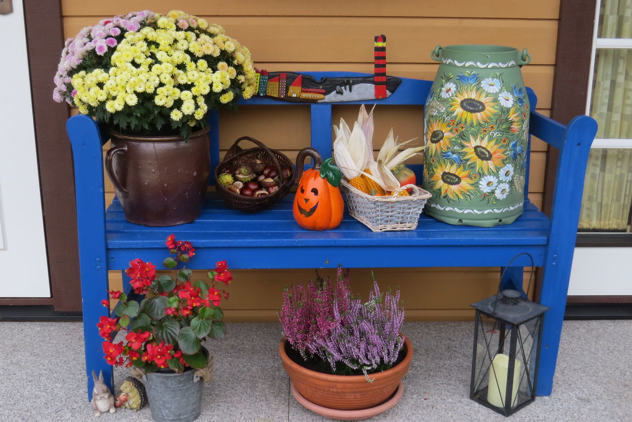 Autumn Decoration Basket With Chestnuts Basket With Corn Blue Bench Next To My Front Door Flower Arrangement Flower Pot Flowers Milk Churn Multi Colored Potted Plant