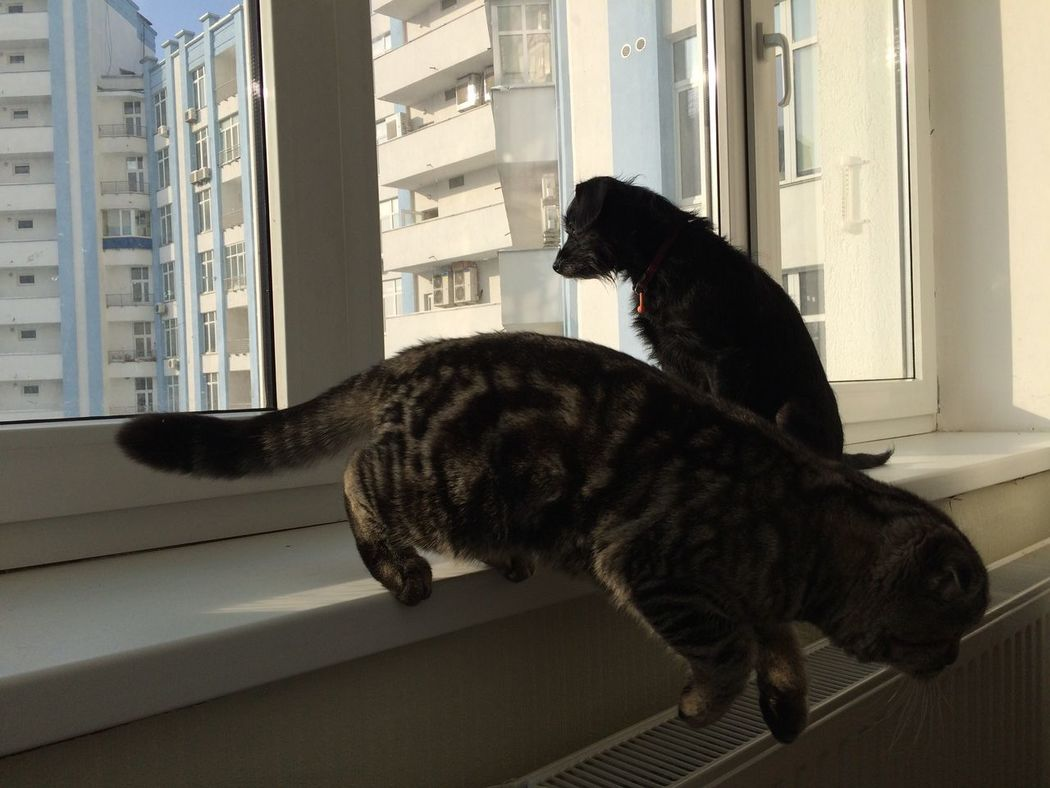 Pets Domestic Cat Domestic Animals Window One Animal Animal Themes Cat No People Colour Of Life Enjoying Life Colors Of Life Ucraina 🇺🇦 I LIKE👍EyeEm😃👍 Sky Blue Emotions I Love It ❤ I❤️photography Hello World I❤️animals Dog Sky
