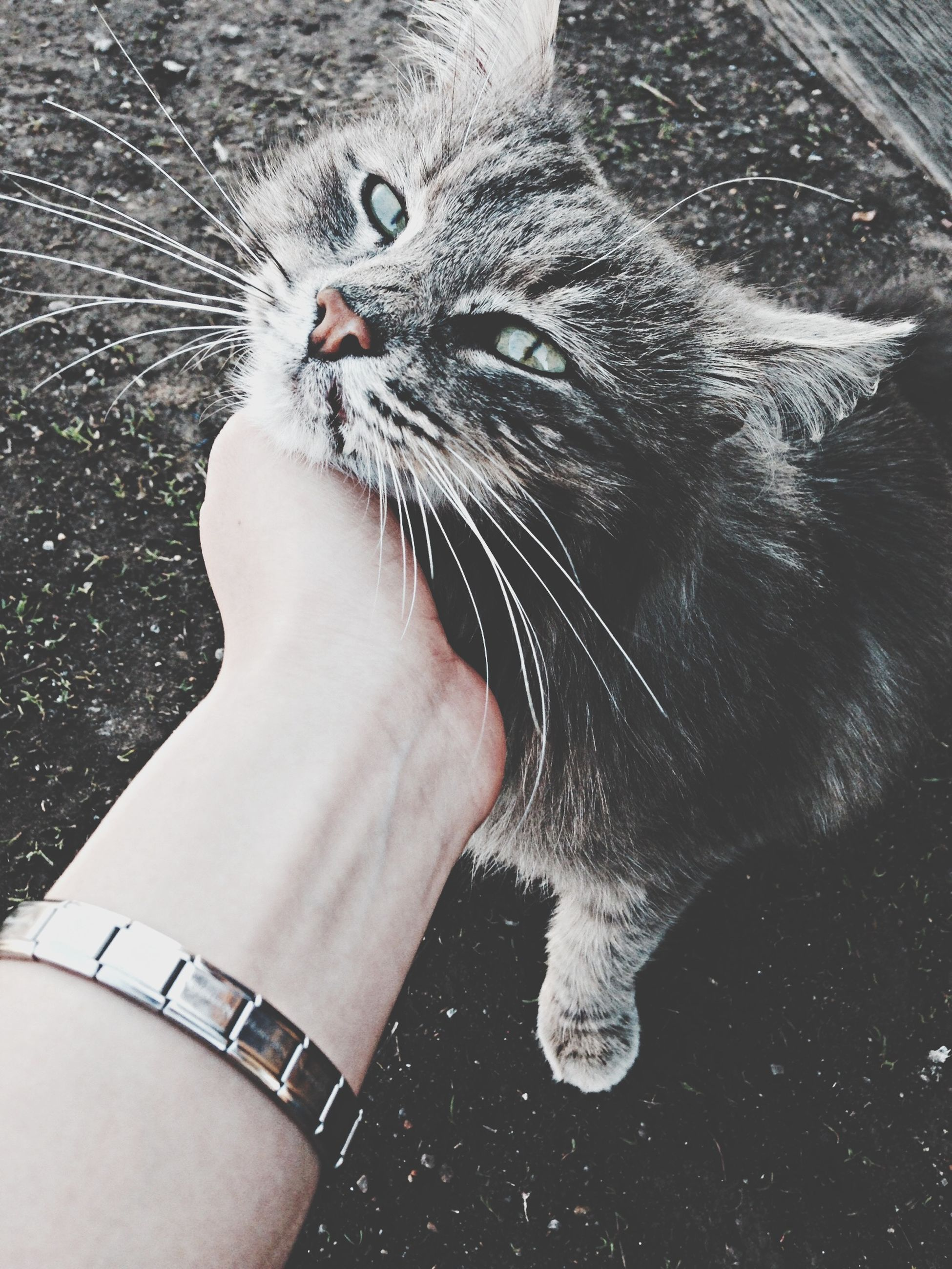 one animal, animal themes, pets, domestic animals, domestic cat, part of, high angle view, cat, mammal, cropped, close-up, person, animal head, animal body part, unrecognizable person, personal perspective, whisker