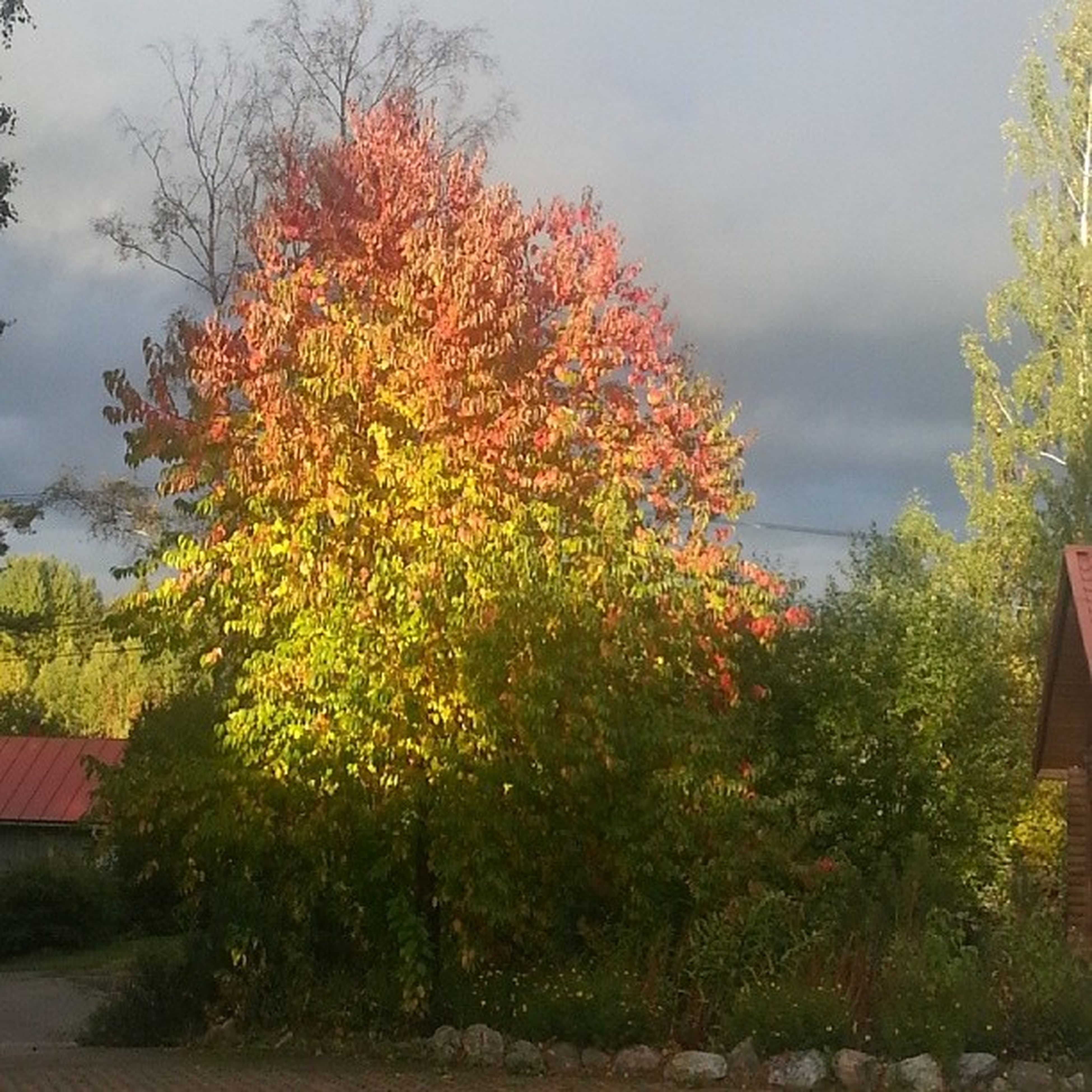 That moment when you want to post a photo as it is, without any effects or filters.... :-) Somethingsinlifedontneedimprovement Autumncolors Nature Finland