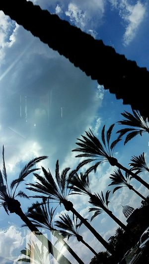 Palm Trees Sky Clouds And Sky Clouds Palm Tree Fresh On The Market Los Angeles, California Cerritos California Blue Relaxing Peaceful Reflection Imperfection Beauty Followfriday Fresh On Eyeem