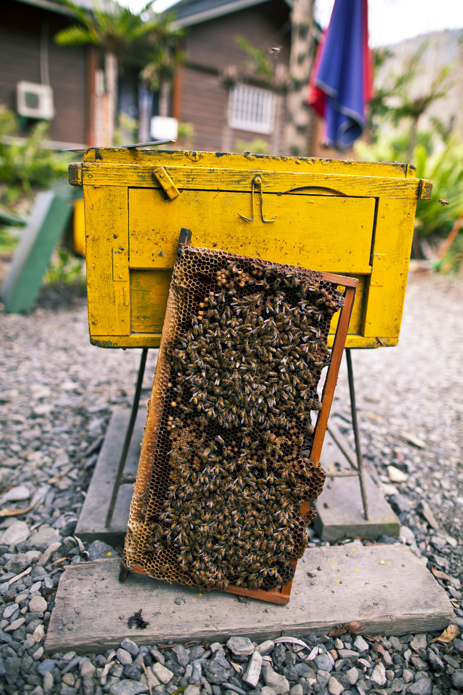 Architecture Beekeeping Bees Built Structure Day Focus On Foreground Honey HoneyBee Hygiene No People Outdoors