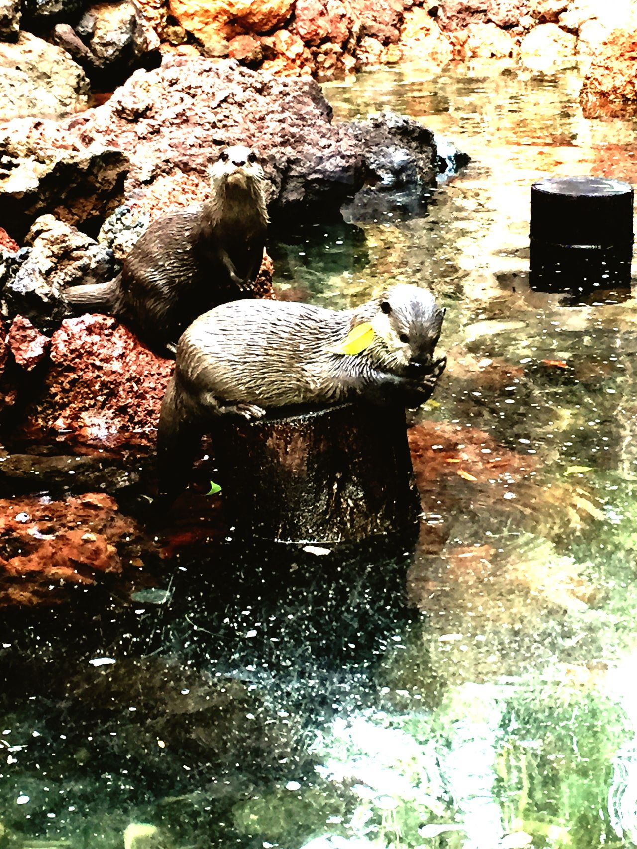 Wildlife & Nature otters Otters