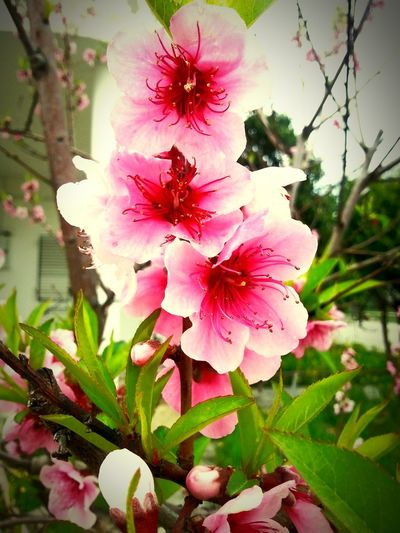 Relaxing Flower Collection Flowers,Plants & Garden Nature_collection Nature Photography Check This Out EyeEmBestEdits Eye4photography  EyeEmBestPics Popular Photos