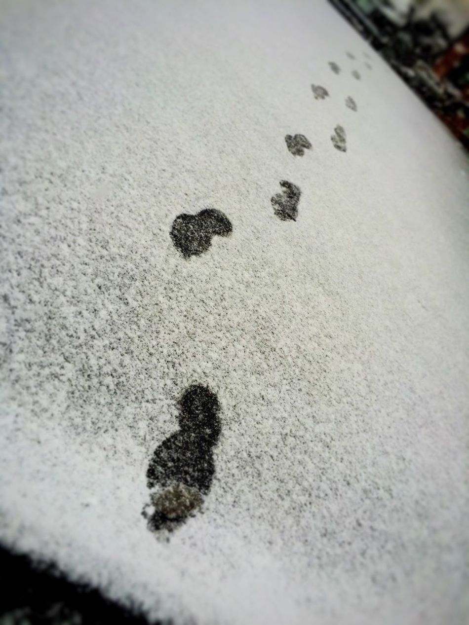 Snow Snow ❄ Snow Day Snow❄⛄ Snowwhite Snow! SNOW!!!! Footprints Footprints In The Snow FootPrintsInTheSnow