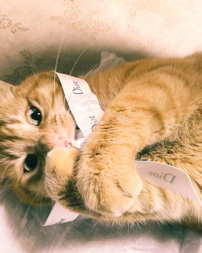 Dior Cat Cat Lovers