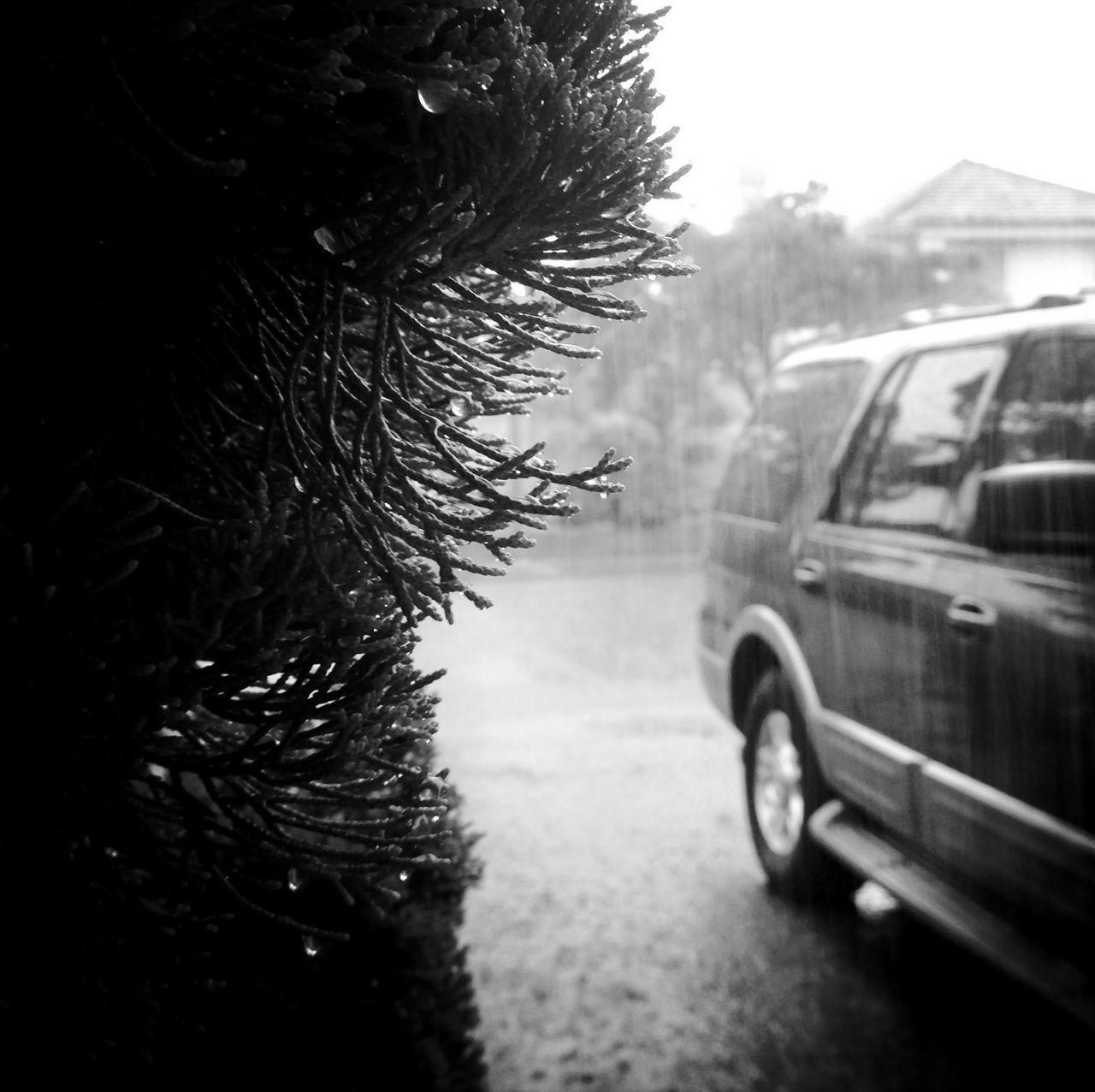 Raindrops Blackandwhite