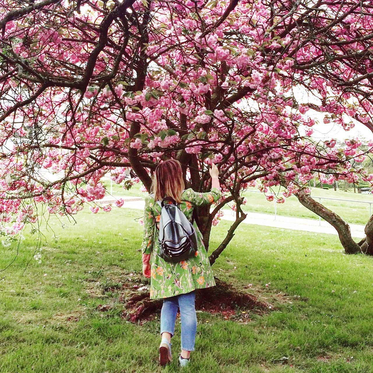 Neighborhood Map Tree Blossom Cherry Tree Orchard Nature Growth Branch Flower Springtime Grass Beauty In Nature One Person Pink Color Day Outdoors Freshness Fragility Standing Rural Scene People