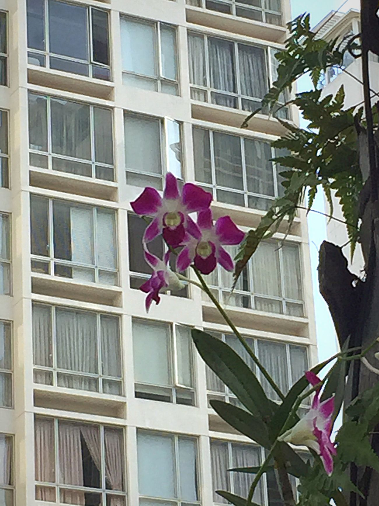 Flowers Orchid Beautiful Day Trees Building Apartments Feeling Thankful From My Point Of View