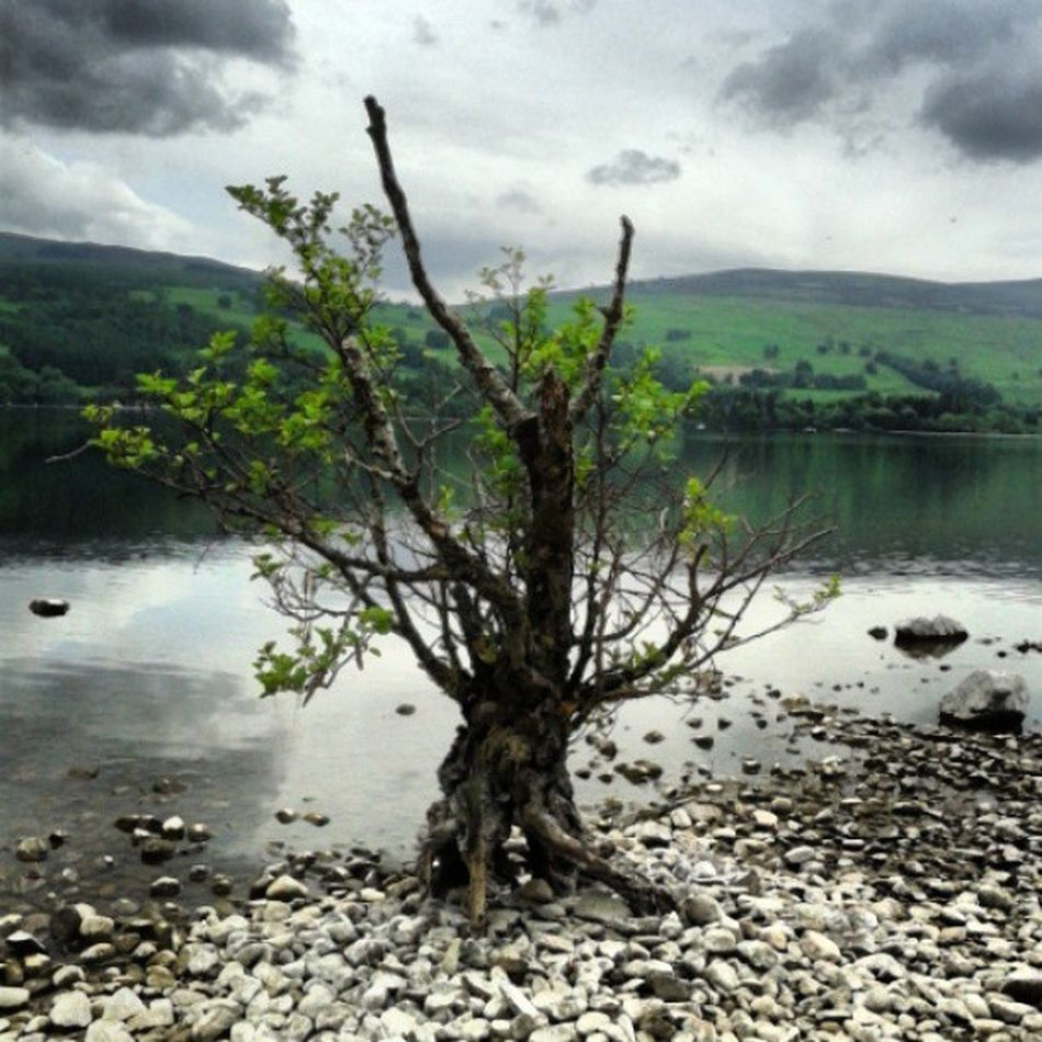 Lonely tree, Loch Tay Lonely Tree Loch Tay Scottish Scenery Trees