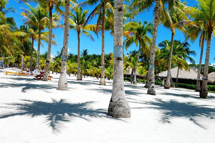 Summer's not yet over! Bohol Philippines Wheninbohol Beachphotography Summer Sand Trees And Sky Sonyphotography Xperia Z Ultra Sony Qx100 CarlZeiss Mobilephotography Colour Of Life
