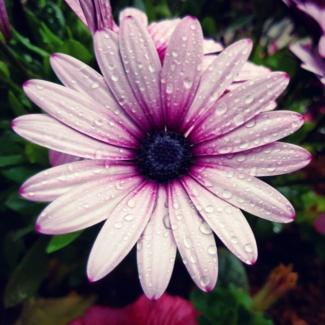 Taking Photos My Smartphone Life Walking Around Flowers Denmark