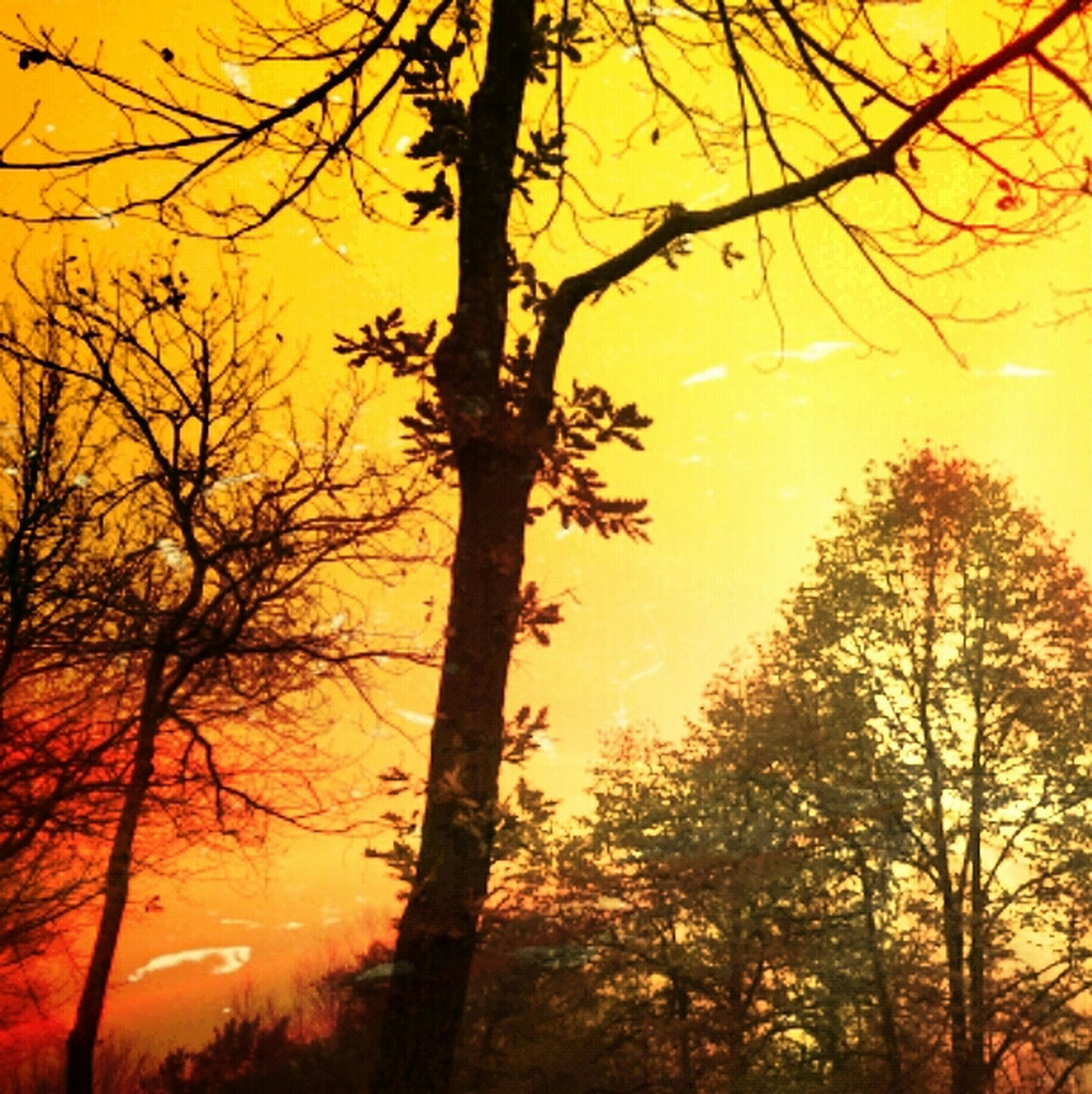 sunset, tree, orange color, branch, bare tree, silhouette, tranquility, scenics, tranquil scene, beauty in nature, nature, sky, sun, idyllic, tree trunk, growth, low angle view, outdoors, yellow, no people