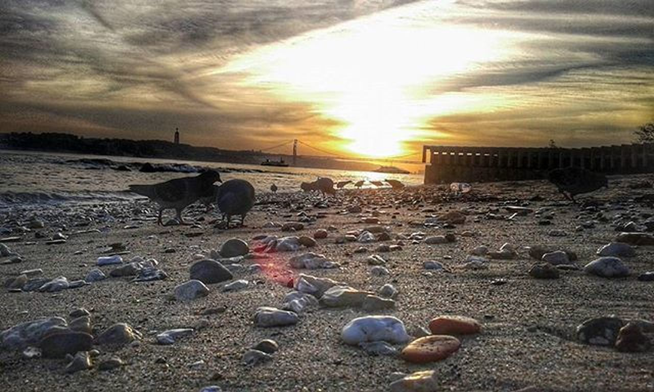 """À procura da perfeita repetição (...)"" 🐦⛅ Sunset Birdsofinstagram Chillin 25aprilbridge Beach Inspire KingChrist Nature Naturelovers Snapseeddaily Snapseed Picoftheday Vscocam Vscophoto Lisbon Lisbonlovers Portugalcomefeitos Portugal"