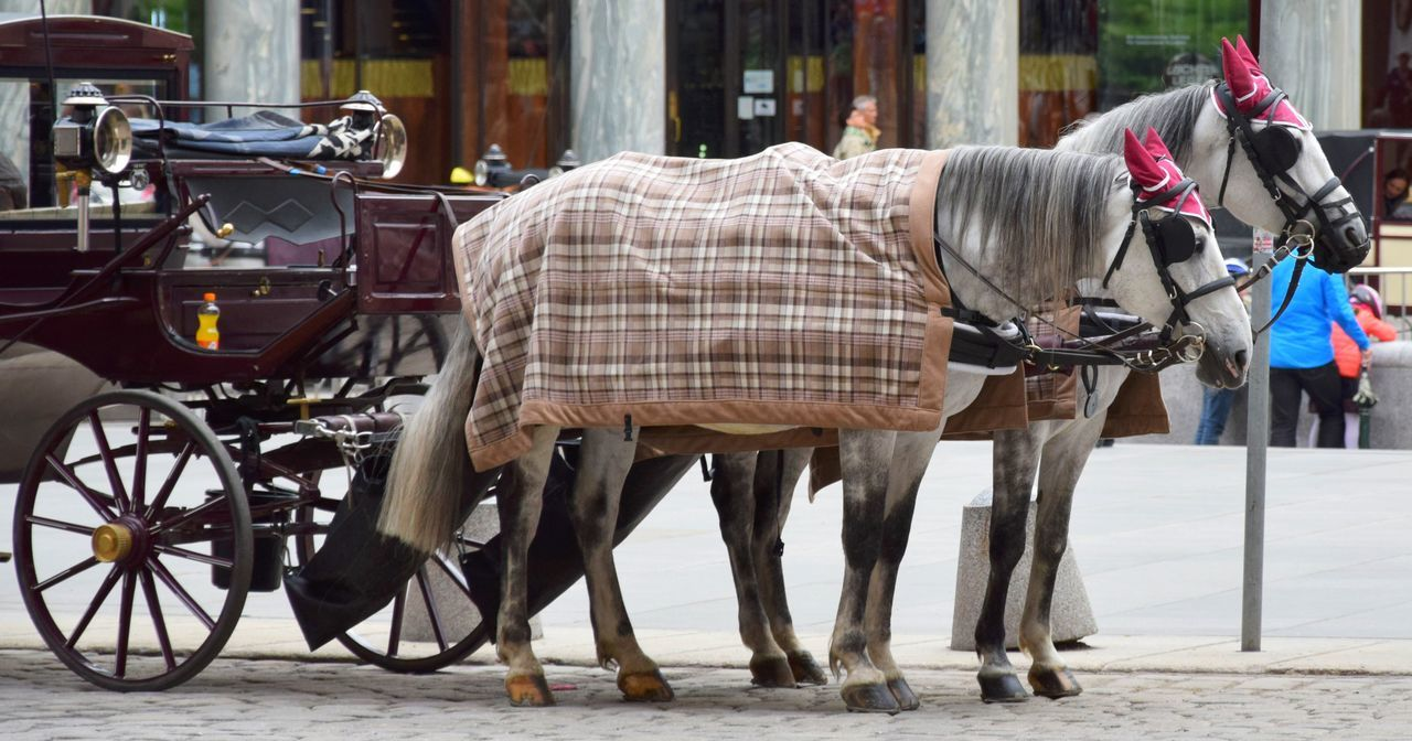 Animal Themes Carriage Day Domestic Animals Fiacre Horse Horse Cart Horsedrawn Livestock Mammal No People Outdoors Transportation Two Horses Working Animal