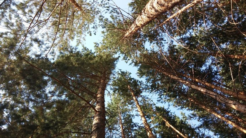 My Best Photo 2014 Erzincan Forest Mountain Day Outdoors Sky No People Beauty In Nature Nature Tree Blue Turkey Nice Photo In The Forest Blue And Green