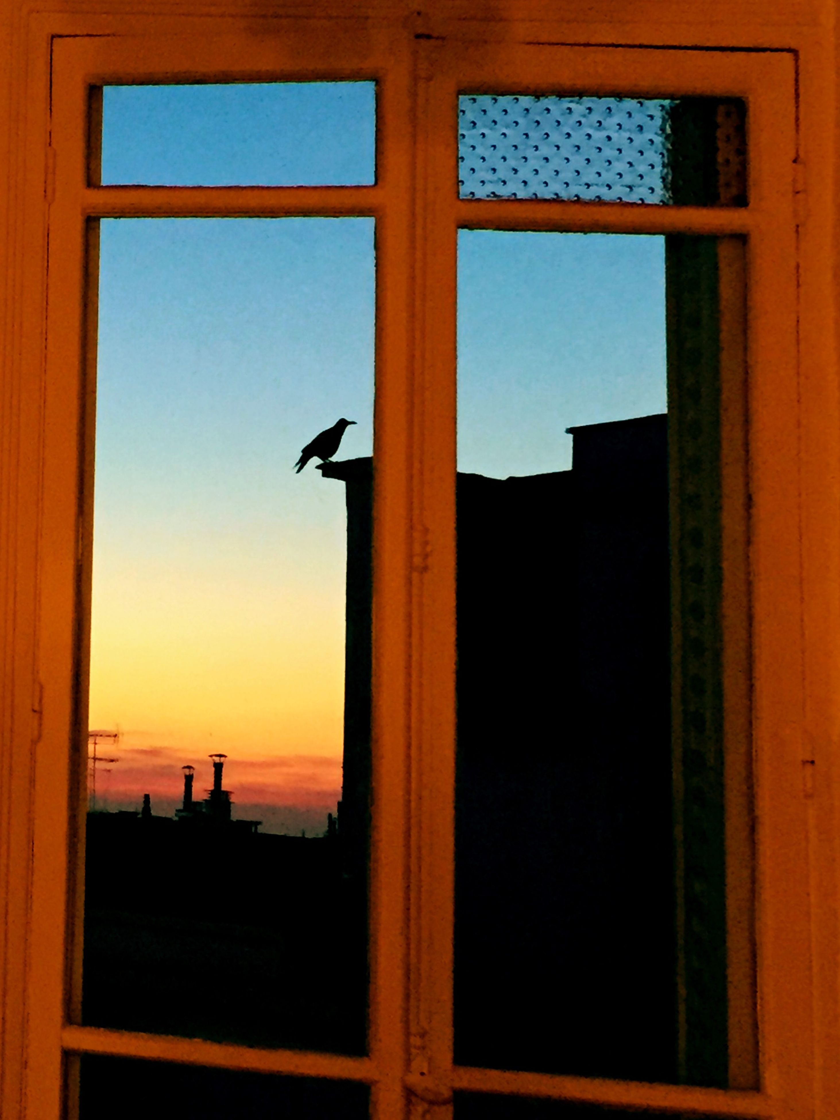 window, silhouette, sunset, built structure, architecture, building exterior, indoors, orange color, low angle view, sky, glass - material, animal themes, bird, house, one animal, building, transparent, no people, sunlight, flying