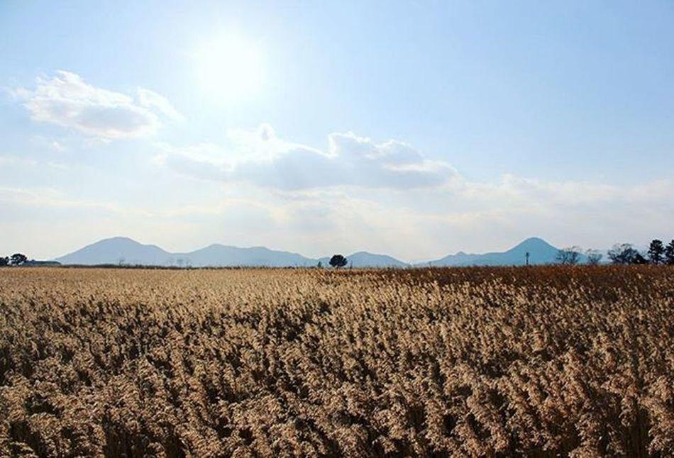 🌳 지천의 갈대보다, 한 그루의 나무. 순천 순천만 갈대 Suncheon 순천만생태공원 Suncheonman 순천여행 Travel Trip 자연 풍경 Landscape 빈카메라 Bincamera