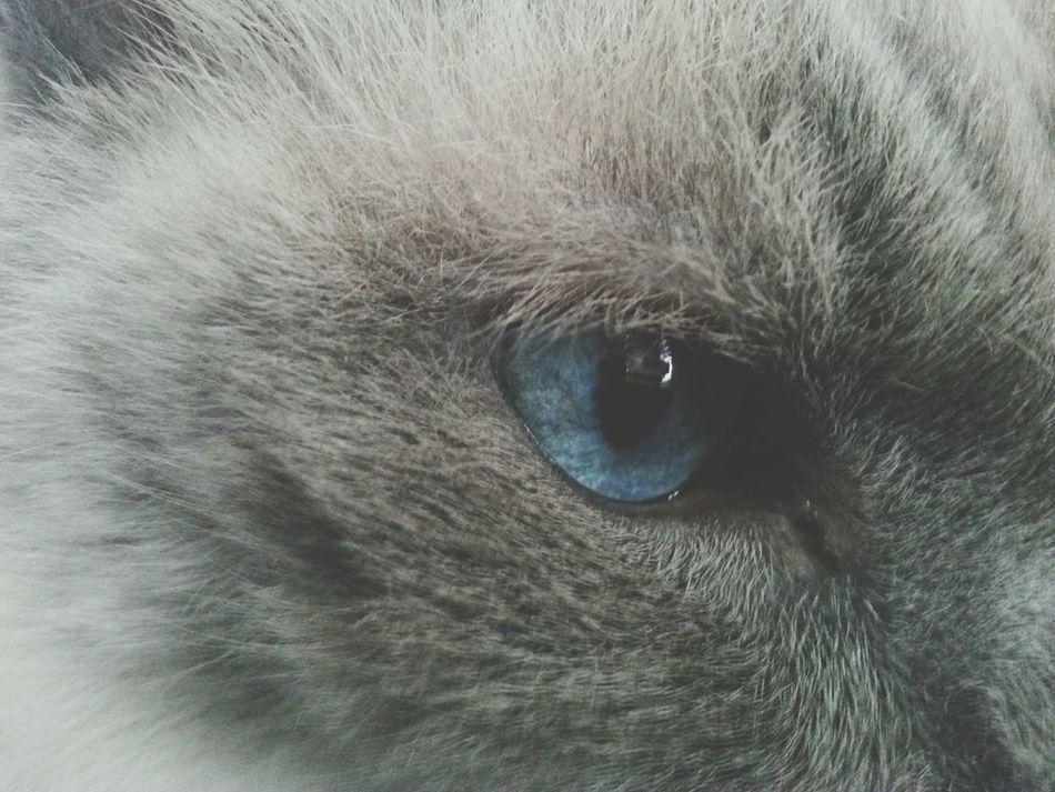 I Love My Cat Zuca His Pretty Eyes