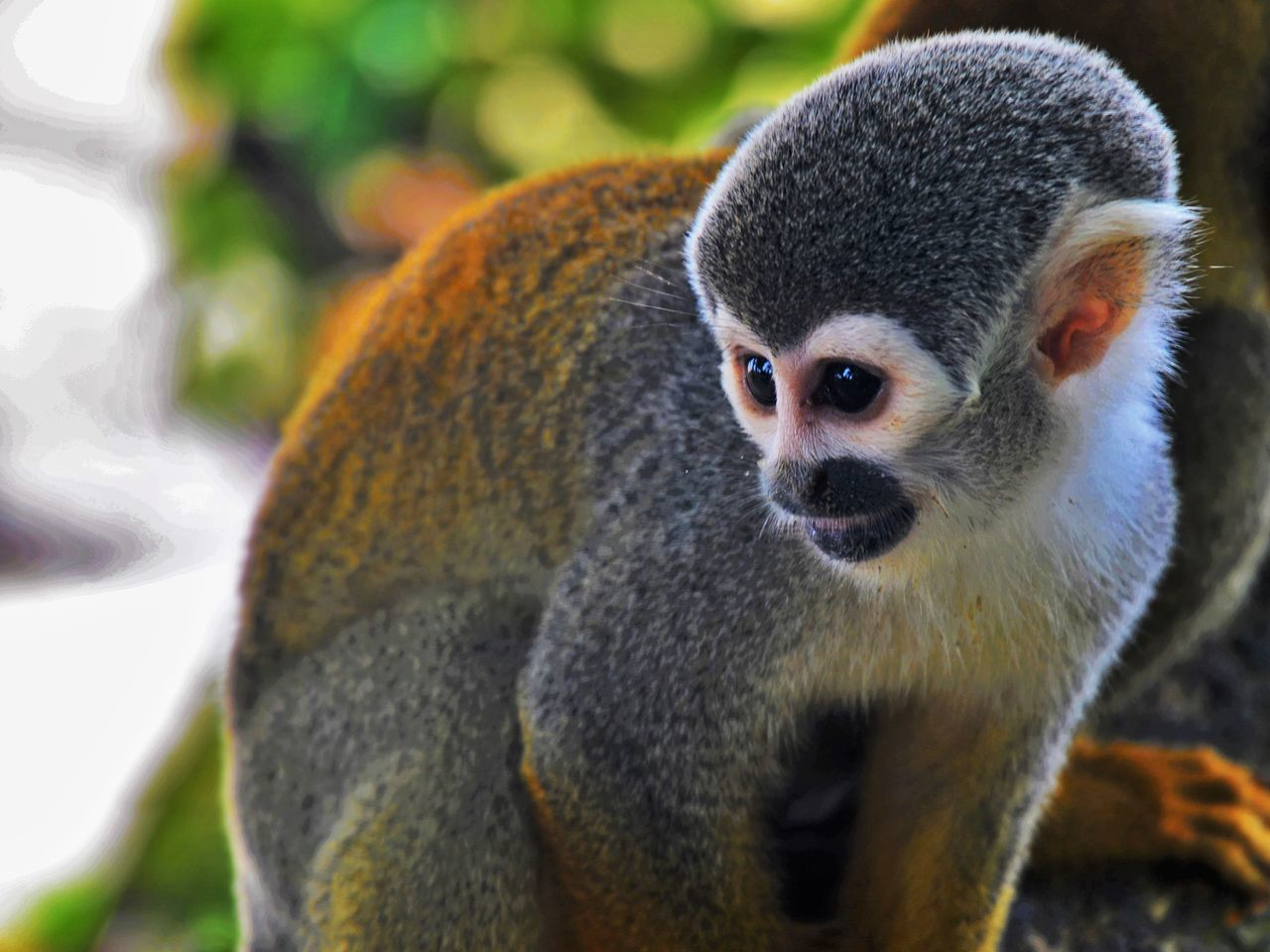 Beautiful stock photos of jungle, Animal Themes, Animals In The Wild, Close-Up, Day