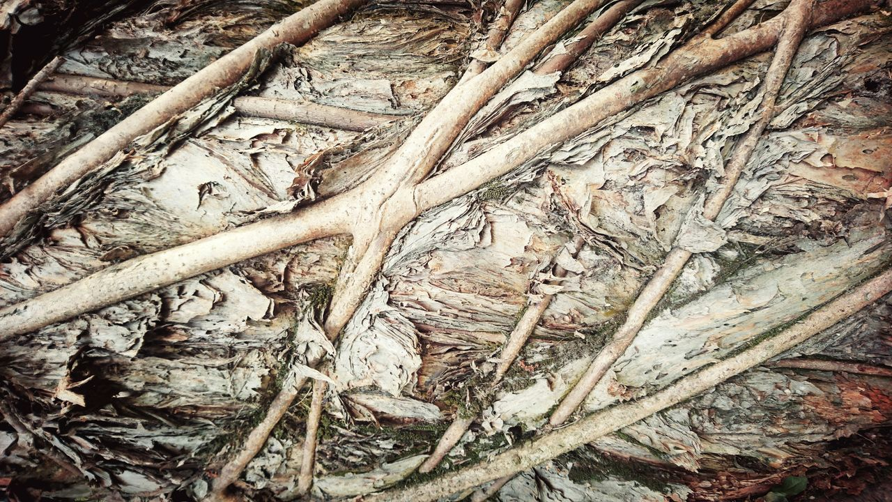 Full Frame Backgrounds Close-up No People Outdoors Day Camouflage Clothing Trunck Hong Kong Beauty In Nature Tranquility Aged Tree Roots Of Tree Roots