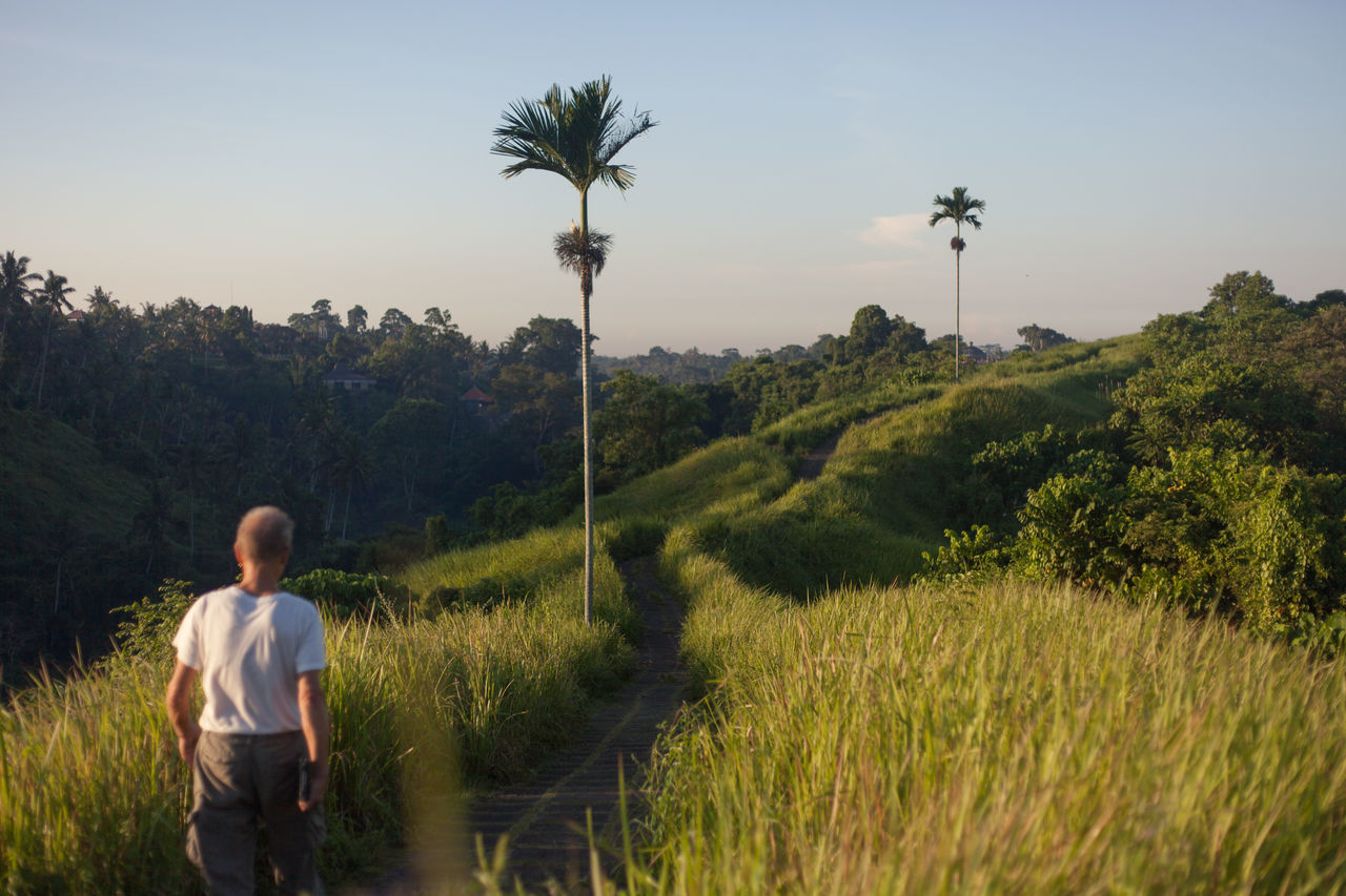 The setting sun casts a golden hue on the Campuhan Ridge Walk. Love the layers of light and shadow it creates. Bali Beauty In Nature Campuhan Ridge Walk Culture Cultures INDONESIA Landscape Nature Outdoors Palm Tree Rice Field Scenery Scenics Sunrise Tree Ubud