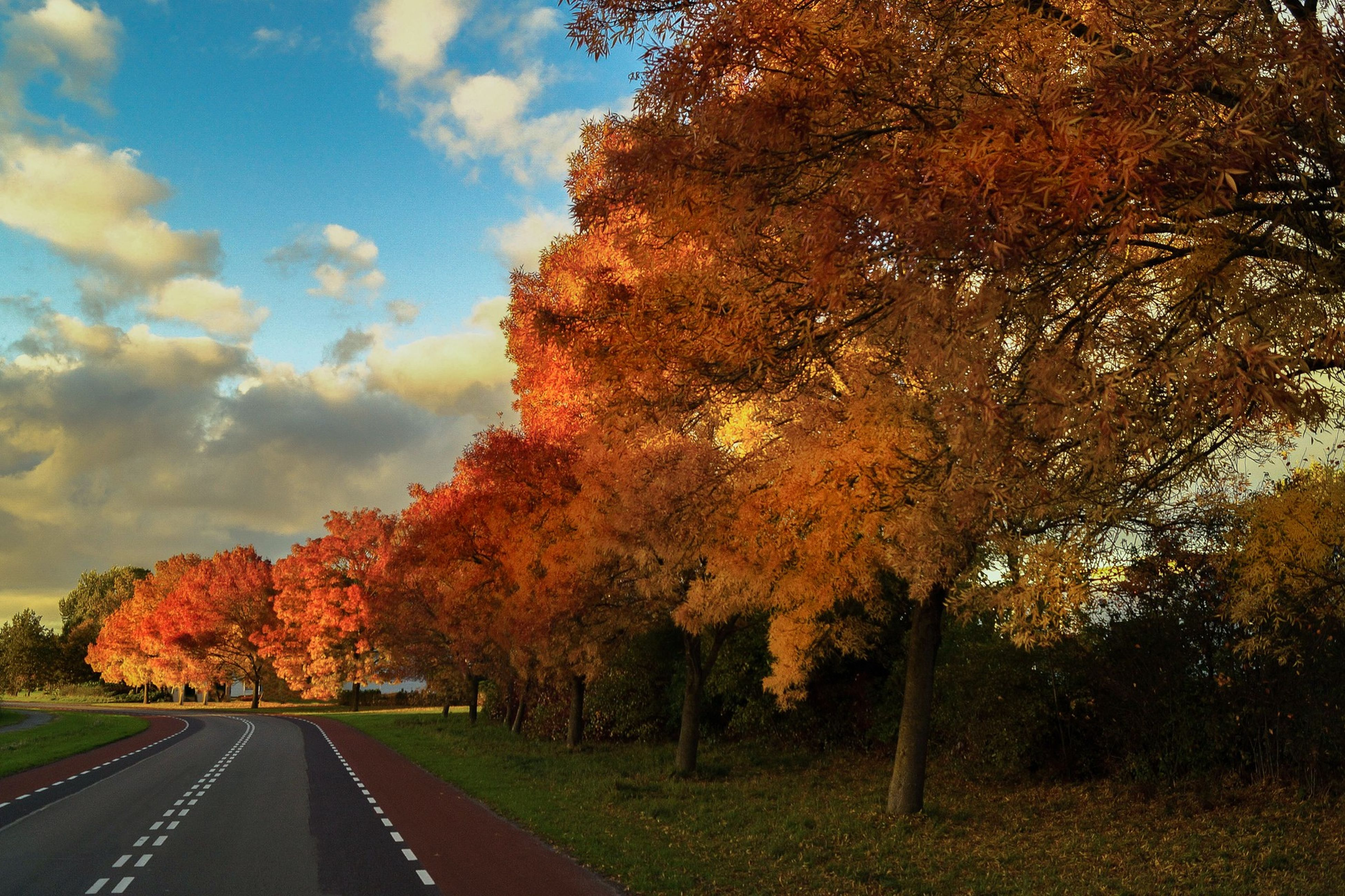 tree, nature, growth, orange color, beauty in nature, red, no people, road, sky, outdoors, day