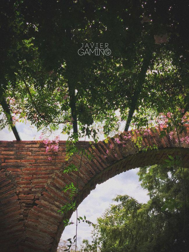 Arandas Arcs Beauty In Nature Green Green Color Growth Hacienda Jalisco Naruto Tranquility