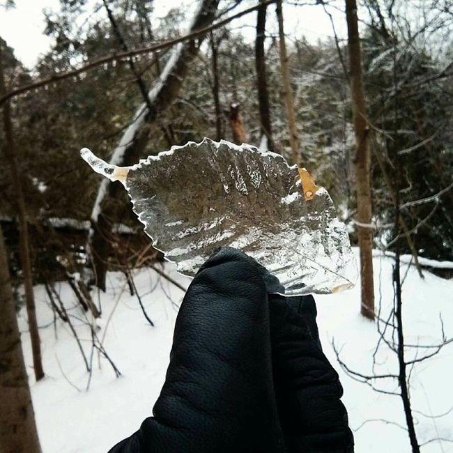 Ice Leaf! :)