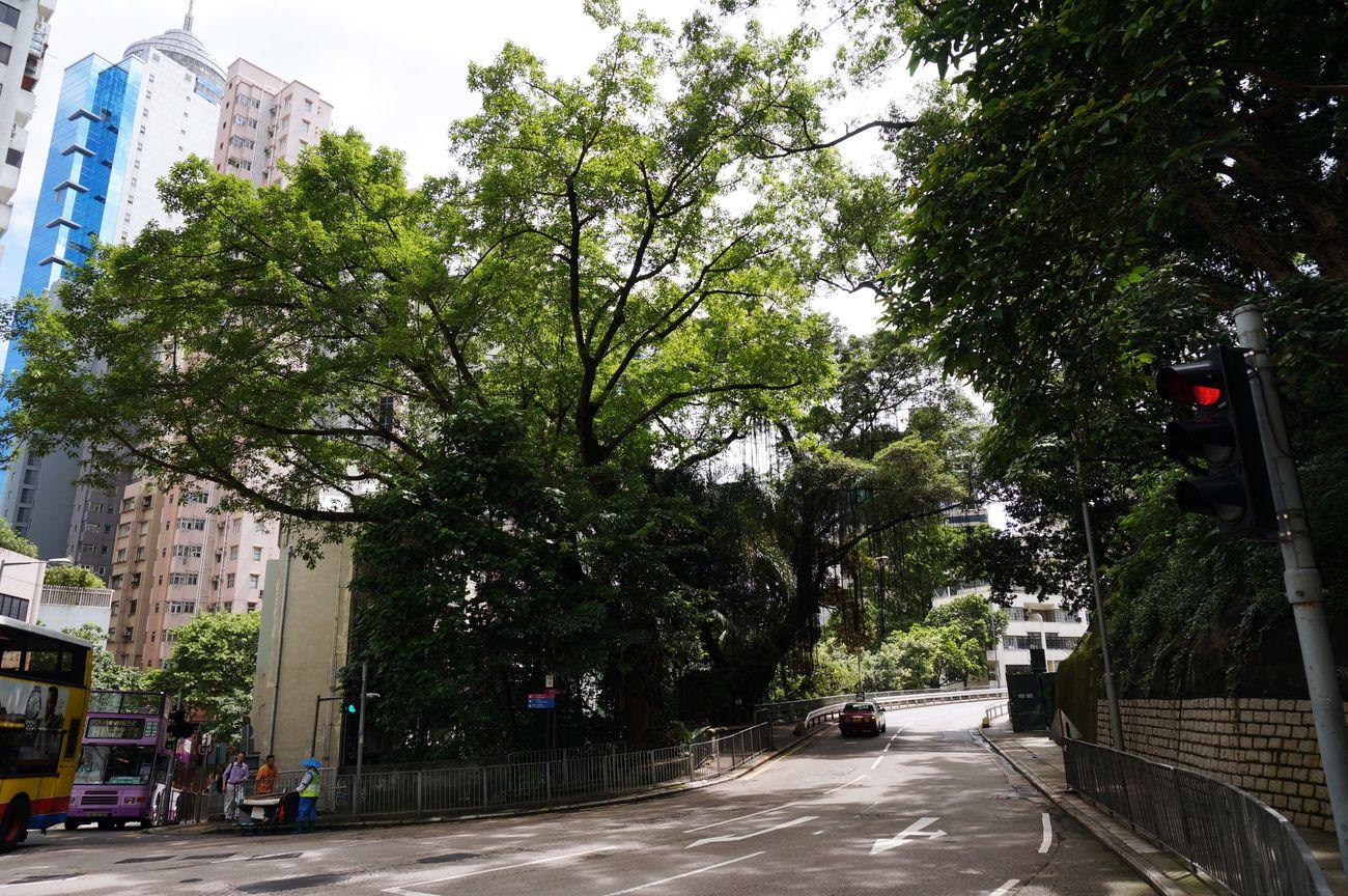 Photos 365 HongKong Streetview Tree