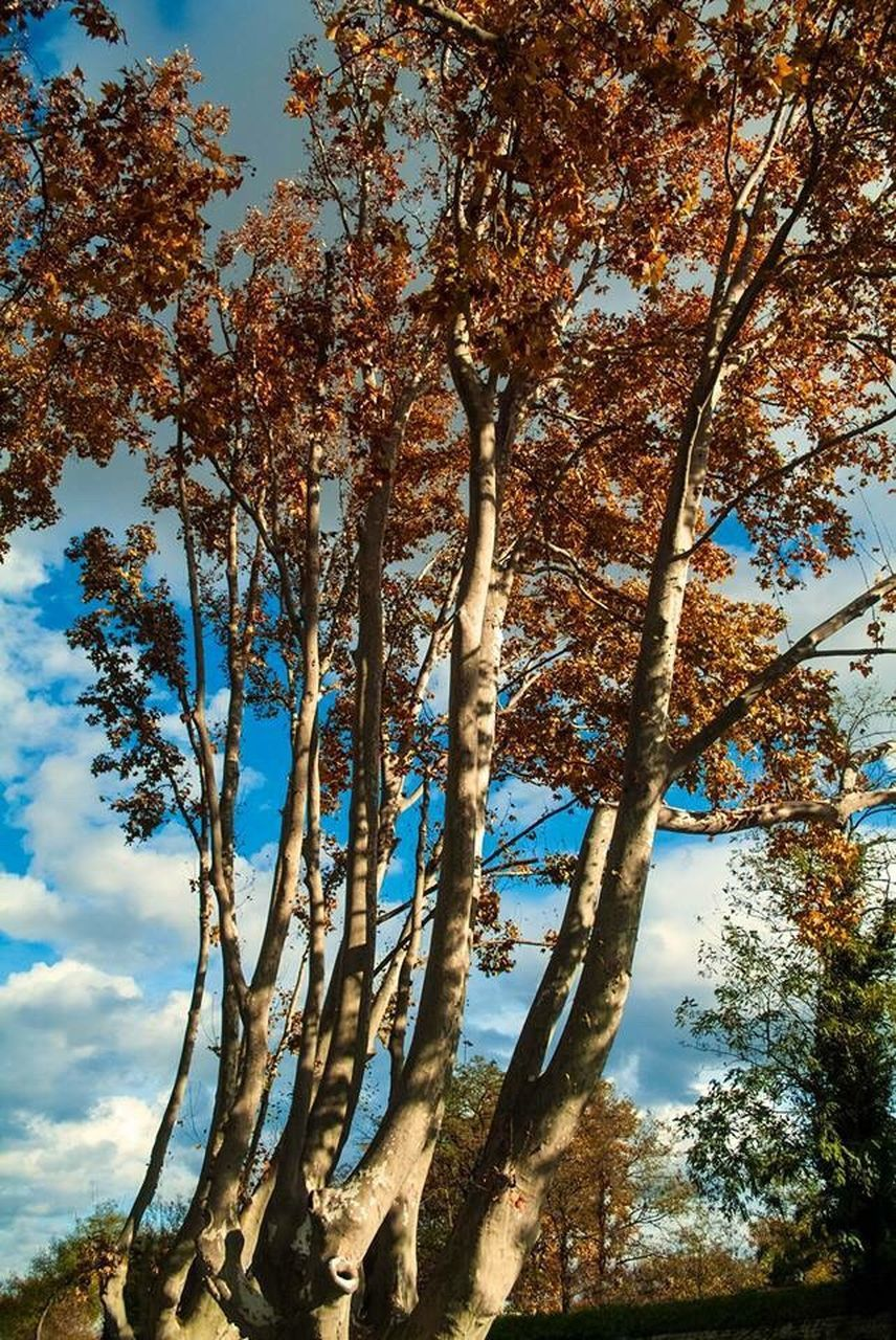 tree, nature, growth, low angle view, day, sky, beauty in nature, tranquility, outdoors, branch, no people, tree trunk, scenics